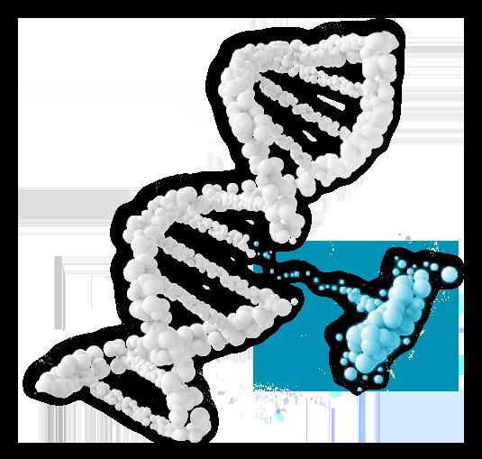 IGF-1 DNA